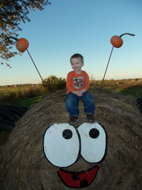 Pumpkin_patch_033