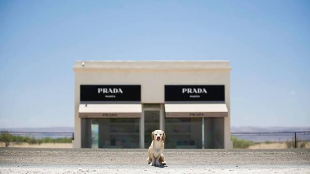 My Regal Beagle