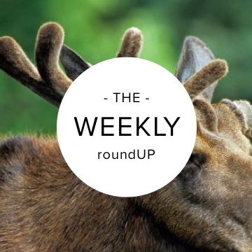 051316_roundUP_featured image